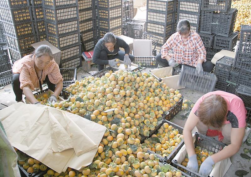 运城不断加快农业产业结构调整步伐